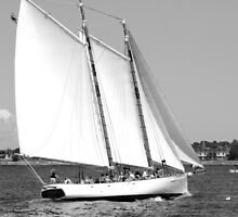 Sailing!  Black and White by Linda Jackson