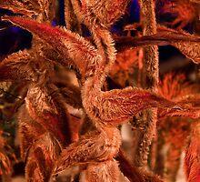 USA. Philadelphia Flower Show 2012. Heliconia. by vadim19