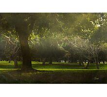 Mystical Woods Photographic Print