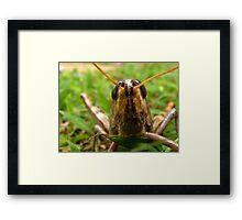 Happy Hawaiian Grass Hopper Framed Print