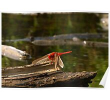 Dragonfly On A River Poster