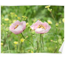 Poppies and Seed Pods Poster