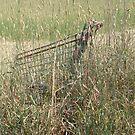 Camouflaged Trolley by Nancy  Joan