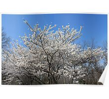 Winter in the Spring Poster