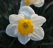 Spring is Here! by Mirenda Wells