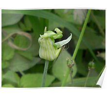Surprise on the Onion Bud - Walking Stick Poster
