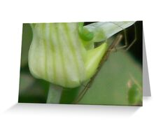 Walking Stick Close-up Greeting Card