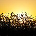 Hidden Sun by Omar Dakhane