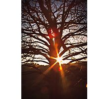 Sunburst in Tooradin Photographic Print