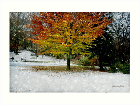 Beech Tree ~ Caught in a Snow Flurry by SummerJade