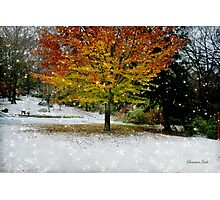 Beech Tree ~ Caught in a Snow Flurry Photographic Print