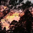 Sunrise in the Dandenongs by Matt  Carlyon