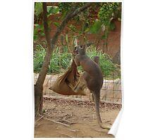 Kangaroo kicking a sack. Poster