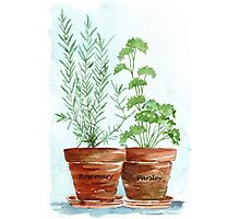 Rosemary and Parsley - Botanical Photographic Print