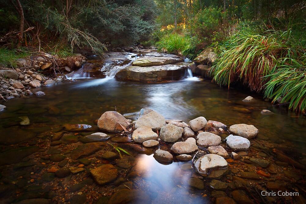 New Town Rivulet #15, Tasmania by Chris Cobern