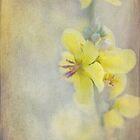 wildflower by Teresa Pople
