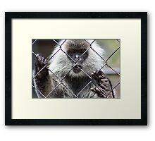 Monkey Behind The Wire Framed Print
