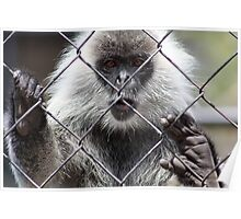 Monkey Behind The Wire Poster