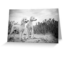 Dudley & Willow Greeting Card
