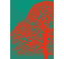 Red Oak  Photographic Print