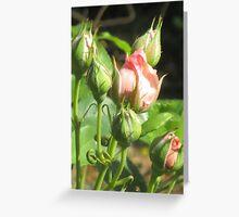 Pink Rosebuds Greeting Card