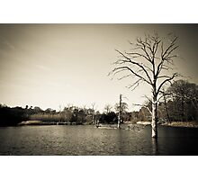 Old Trees in Lake Landscape Photographic Print