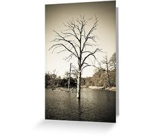 Old Tree in Lake Greeting Card