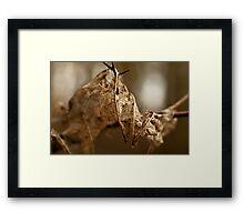 Leaf Skeleton Framed Print