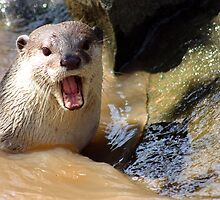 Angry Otter by jweeks