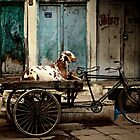 Goat on Wheels by Valerie Rosen