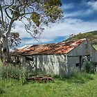 Shed in shade by Jan Pudney