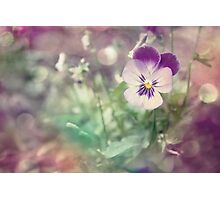 Pansy Fantasy Photographic Print
