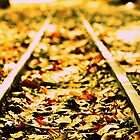 On track.... by Saif Zahid