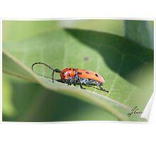 The Red Milkweed Beetle Poster
