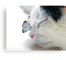 BUTTERFLY SAT ON A SLEEPING CAT NOSE  Canvas Print