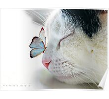 BUTTERFLY SAT ON A SLEEPING CAT NOSE  Poster