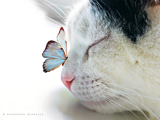 BUTTERFLY SAT ON A SLEEPING CAT NOSE  by mike2048
