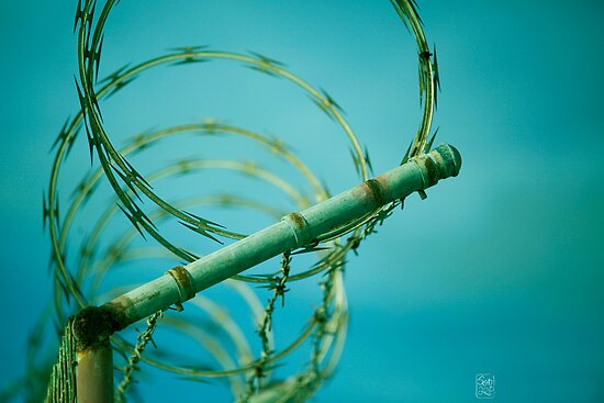 BarbWire by Sonia de Macedo-Stewart