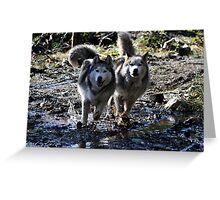Husky Siblings Greeting Card