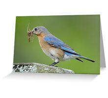 Mother Bluebird Makes her Nest Greeting Card