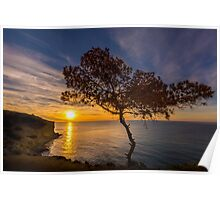 Lone tree greets the sunrise Poster
