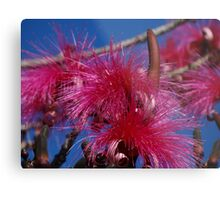 Nature And Colours - Madre Naturaleza Y Colores Metal Print