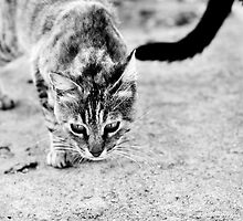 Stray life by Laura Melis