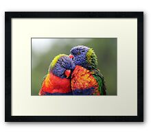 Canoodling in the Mist Framed Print