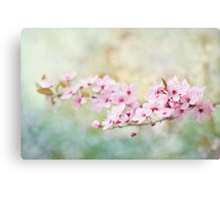 Spring Reverie Canvas Print