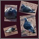 Riverside Pigeons Collage by BlueMoonRose
