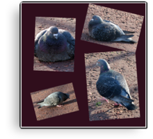Riverside Pigeons Collage Canvas Print
