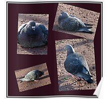 Riverside Pigeons Collage Poster