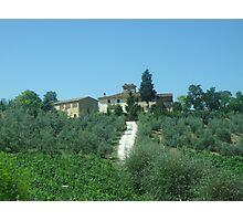 Italian Vineyard  Photographic Print