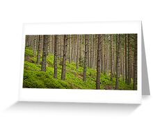 Green Carpet Greeting Card